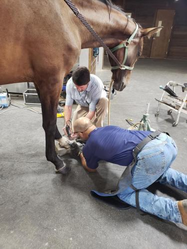 Joint Farrier work